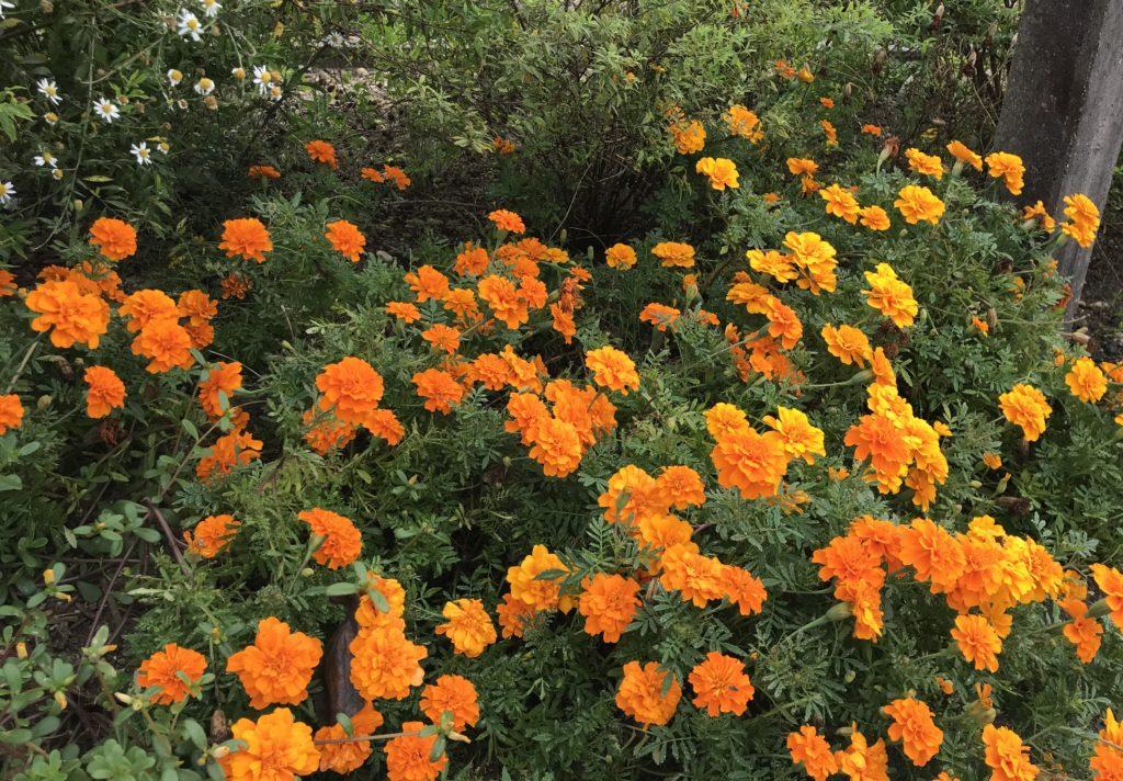 花のリレープロジェクト